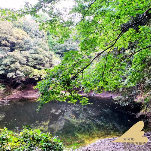 竈門神社裏の池